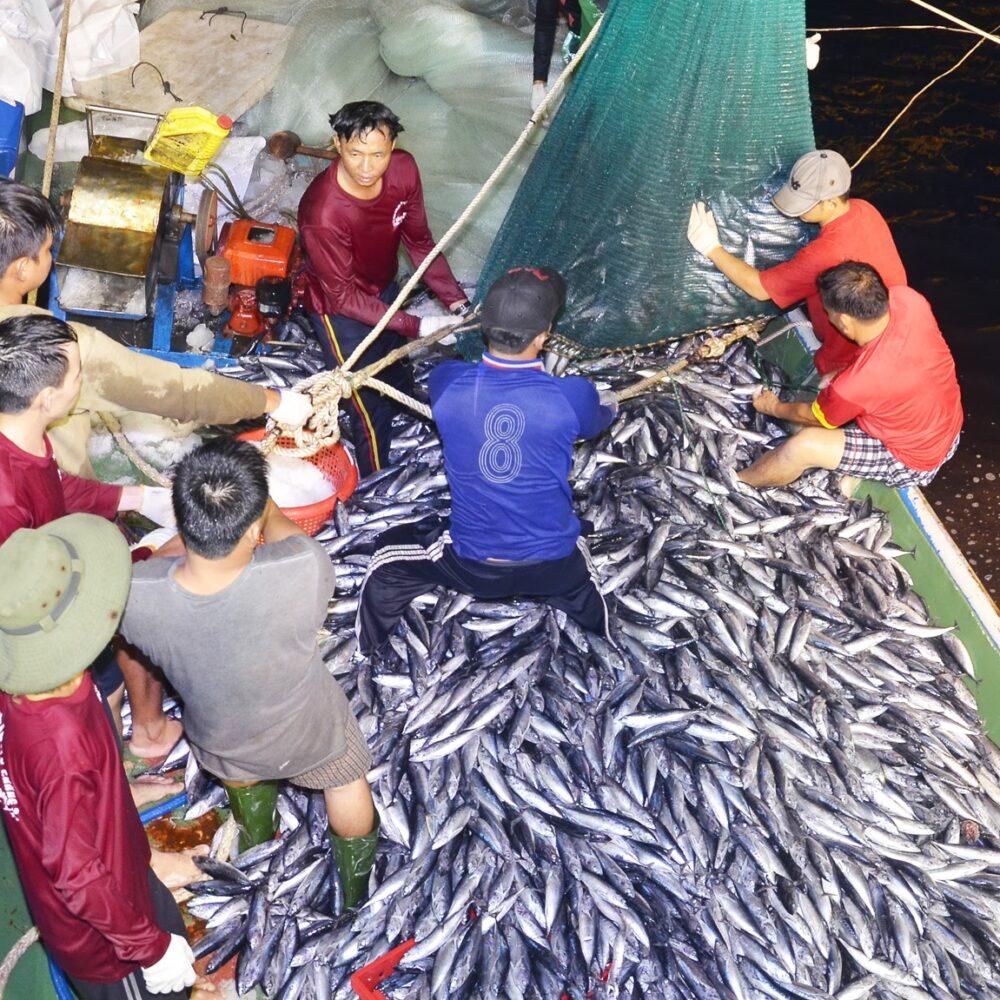 công ty sản xuất bột cá
